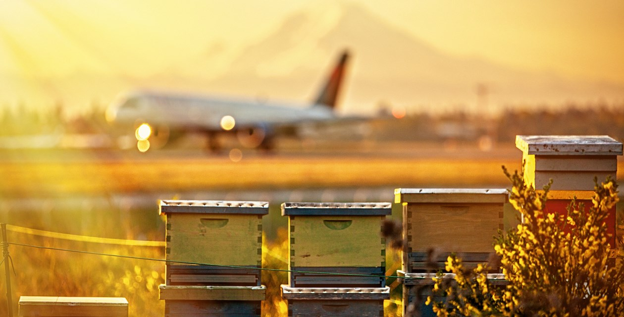 Bee Hives at SeaTac
